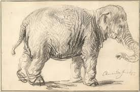 Elephant by Rembrandt
